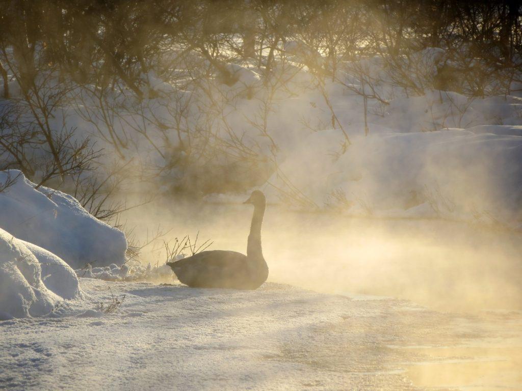 лебединое озеро зимой